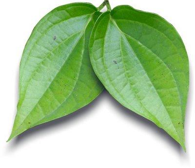 keterangan biasanya untuk obat hidung berdarah dipakai 2 lembar daun